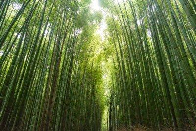 bamboo blinds wooden venetian bamboo blinds