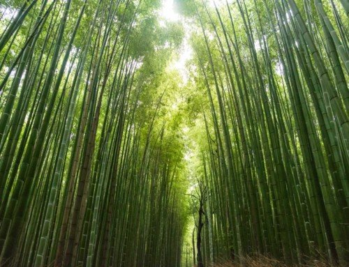 Sustainable Bamboo as a choice for Venetian Blinds